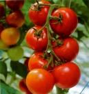 Đàn ông nên ăn nhiều cà chua