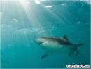 Thuốc trị ung thư vú từ cá mập