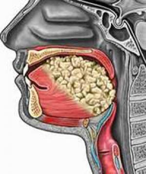 Giải phẫu khoang miệng (Nguồn: Internet)