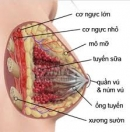Xơ nang tuyến vú có quá nguy hiểm?