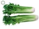 Chống ung thư vú từ rau mùi tây, cần tây