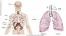 Điều trị ung thư phổi tế bào nhỏ (Tài liệu dành cho bệnh nhân)