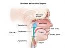 Phát hiện thuốc mới giúp điều trị ung thư đầu và cổ