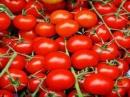 Cà chua nấu chín làm chậm và tiêu diệt tế bào ung thư