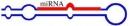 MicroRNA tác động rất lớn tới các khối u Ung thư phổi