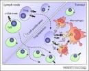 FDA cho phép sử dụng thuốc ức chế quá trình chết theo chương trình: Pembrolizumab điều trị ung thư hắc tố