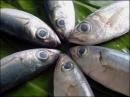 Ăn nhiều cá tươi giúp tránh ung thư