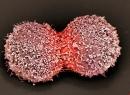 Tìm ra phương pháp chữa ung thư mới bằng hệ miễn dịch